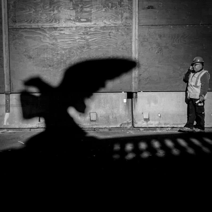 eagle-shadow